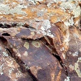 Moss-Rock-Detail